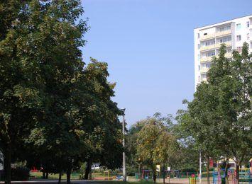 Tragedia w Toruniu. W mieszkaniu znaleziono zwłoki