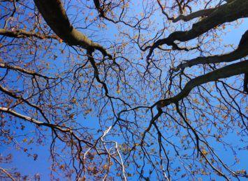 Mieszkańcy Jaru zaniepokojeni ostatnią wycinką drzew