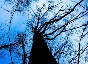Kolejne wycinki drzew w Toruniu