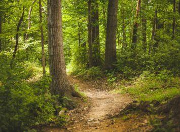 Lasy znowu są pełne grzybiarzy