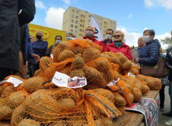 Rolnicy rozdawali ziemniaki