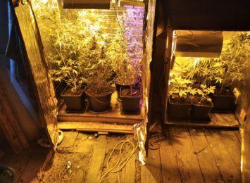 W domu uprawiał marihuanę