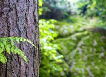 Miasto zleca wycinkę drzew w Parku Miejskim