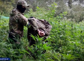 Plantacje marihuany w lesie. To mogły być ponad 3 mln zł [FOTO/ WIDEO]